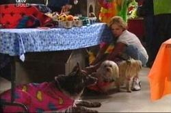 Harvey, Bob, Audrey, Sky Mangel in Neighbours Episode 4466