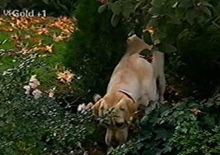 Bonnie in Neighbours Episode 2921
