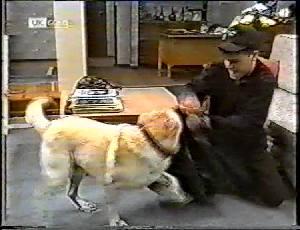 Bouncer, Michael Martin in Neighbours Episode 1783