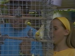 Todd Landers, Katie Landers in Neighbours Episode 0891