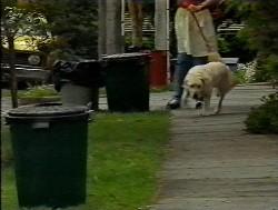 Bouncer in Neighbours Episode 1849