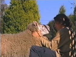 Casserole the sheep, Joel Samuels in Neighbours Episode 3150
