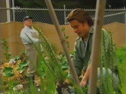 Harold Bishop, Drew Kirk in Neighbours Episode 3162