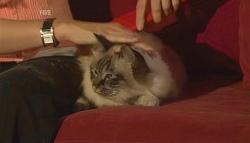 Cat in Neighbours Episode 5676