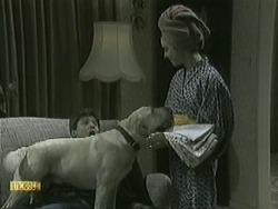 Joe Mangel, Bouncer, Kerry Bishop in Neighbours Episode 1068