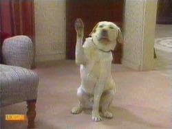 Bouncer in Neighbours Episode 0667