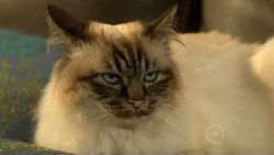 Cat in Neighbours Episode 5876
