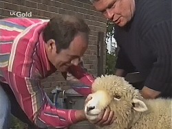 Philip Martin, Casserole the sheep, Lou Carpenter in Neighbours Episode 2414