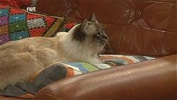 Cat in Neighbours Episode 6048