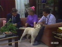 Mike Young, Daphne Clarke, Bouncer, Des Clarke in Neighbours Episode 0441