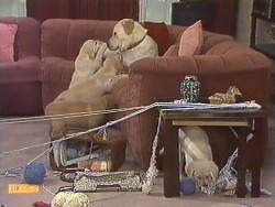 Bouncer in Neighbours Episode 0634
