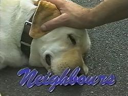 Bouncer in Neighbours Episode 1172