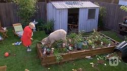 Sheila Canning, Chop in Neighbours Episode 6735