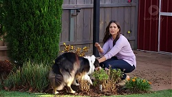 Clancy, Dipi Rebecchi in Neighbours Episode 7961