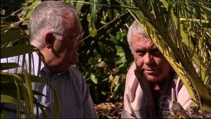 Harold Bishop, Lou Carpenter in Neighbours Episode 5013