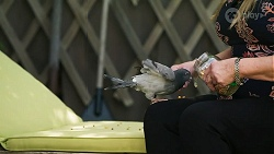 Gary the Pigeon, Sheila Canning in Neighbours Episode 8340