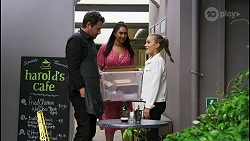 Shane Rebecchi, Dipi Rebecchi, Roxy Willis in Neighbours Episode 8421