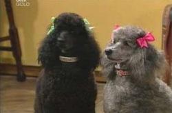 Stella/Blanche in Neighbours Episode 4237