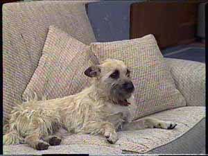 Basil in Neighbours Episode 0416